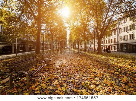 Beautiful street in the autumn in Dresden Saxony Germany Europe.