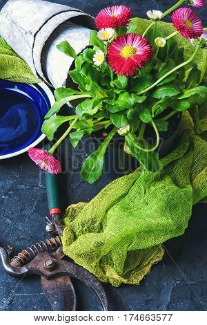 Spring Flower And Garden Tools