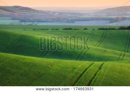 Wavy Green Fields.  Striped Rolling Sunny Hills At Sunset