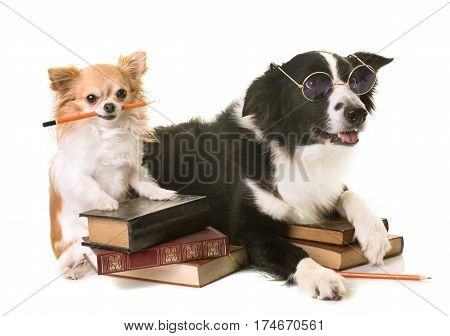 dogs in school in front of white background
