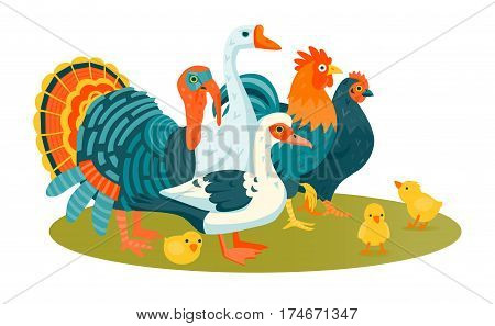 Group of domestic funny birds vector illustration cartoon style