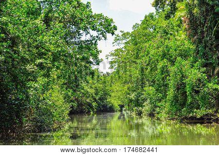 Rivery Scenery In Daintree Rainforest, Australia