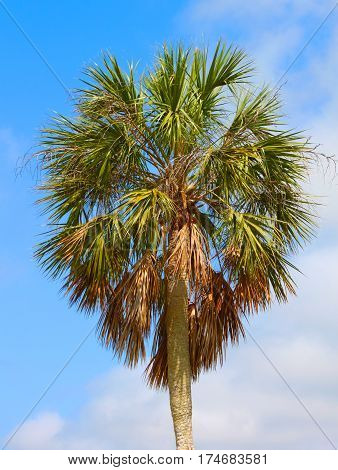 Palm tree background against blue sky at Everglades National Park Florida
