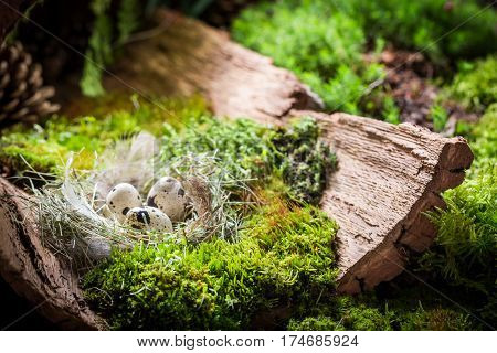 Various Easter Eggs On Bark With Moss