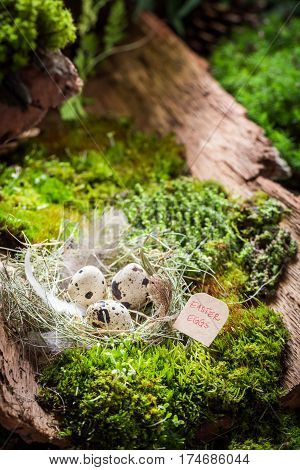 Quail Eggs For Easter On Bark With Moss