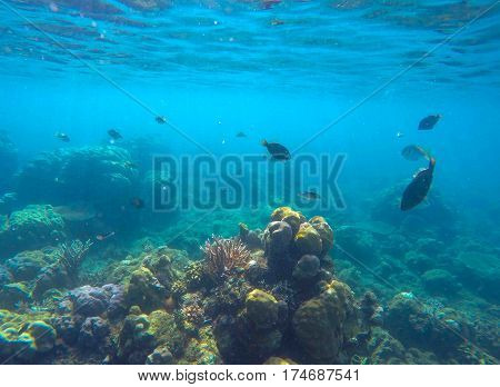 Undersea scene with marine animals. Exotic seashore corals and fishes. Snorkeling photo of sea bottom view with diverse species. Oceanic life environment. Silhouette of coral fish in turquoise water