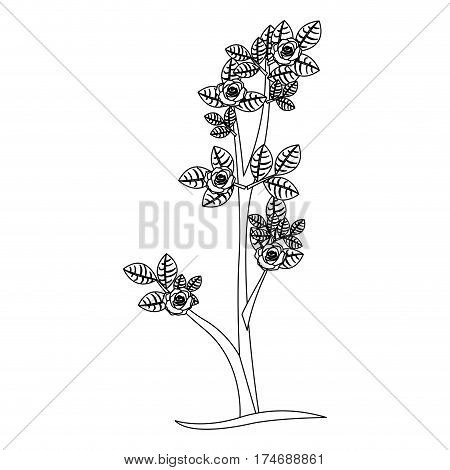 silhouette ramification with roses nature design vector illustration