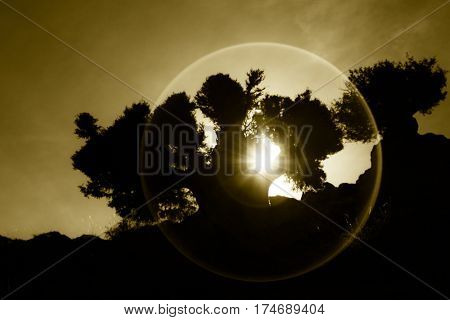 Sunset or sunrise through silhouette of an old tree in the desert. Backlit with halo effect.