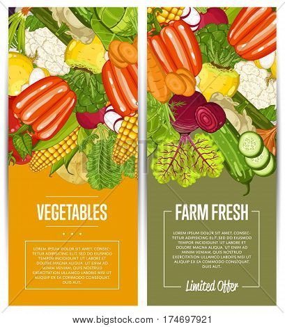 Organic vegetable farming flyers set vector illustration. Locally grown vegetable, vegan retail, natural product. Healthy farm food advertising with broccoli, potato, corn, cabbage, tomato, radish