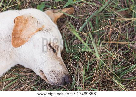 pitiable wounded dog laying on green grass