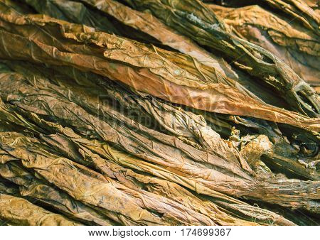 Dried raw tobacco leaves. Golden leaf background. Tobacco leaf under sun. Cigarette ingredient or raw material. Tobacco leaf pile. Bunch of raw tobacco leaves. Natural smoking plant leaf mound photo