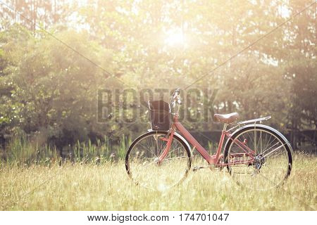 Landscape Picture Vintage Bicycle With Summer Grass Field