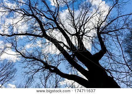 Bare Branches Of Tree On Sky Background In The Backlight