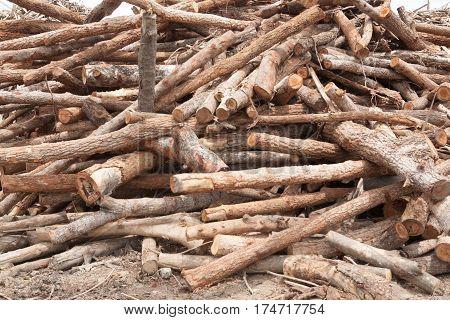 Stacked of teak tree wood logs background