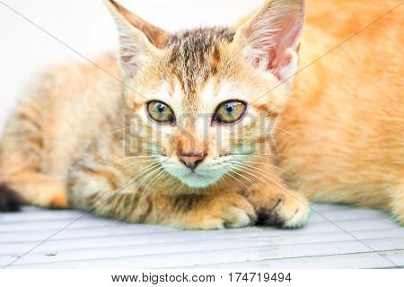 Small kitten on wooden background. Outdoor life of domestic cat. Feline baby portrait with curious sight. Homeless kitten with mother. Lovely brown kitty. Domestic pet living outdoor. Lovely animal