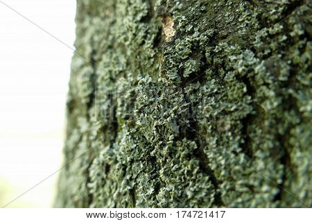 Moss On A Tree Macro Shot