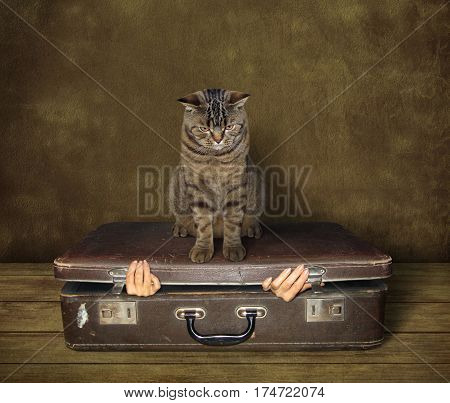 The woman is inside a old suitcase. She wants to get out of it. But the big cat is sitting on the suitcase.
