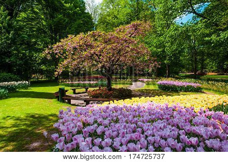 The tulip field in Keukenhof Gardens, Lisse, Netherlands