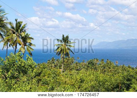 Landscape with palm tree and sea. Blue sky view with coco palm trees. Romantic image of palm tree leaves. Exotic landscape summer picture. Exotic island tourist banner template or card background