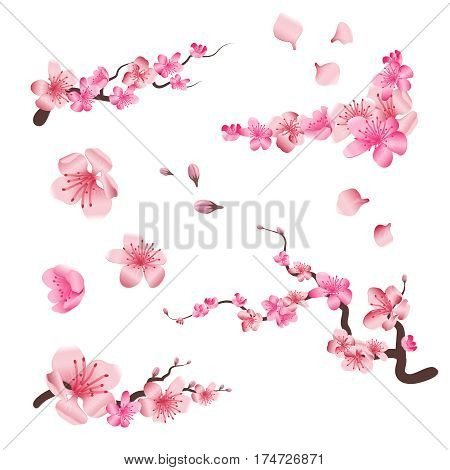 Spring sakura cherry blooming flowers, pink petals and branches vector set for your own design. Branch of sakura with flower blossom, illustration of pink flowers