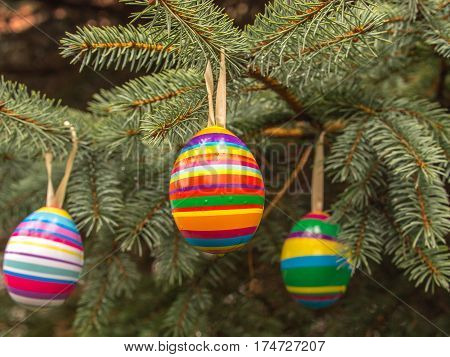 Colourful Easter eggs on Christmas tree Poland