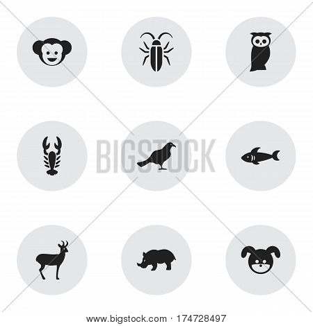 Set Of 9 Editable Zoo Icons. Includes Symbols Such As Rhino, Owl, Reindeer And More. Can Be Used For Web, Mobile, UI And Infographic Design.