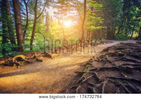 Majestic view on bright path with sunny beams. Picturesque and gorgeous scene. Popular tourist attraction. Location famous resort Plitvice Lakes National Park, Croatia, Europe. Beauty world.