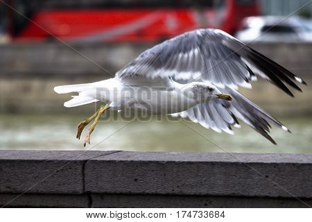 White bird takes off from the parapet