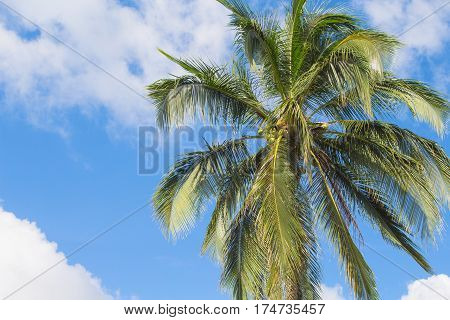 Palm tree and blue sky tropical island photo. Sunny exotic summer card. Tropical island nature. Palm tree leaf on sky background. Fresh green palm tree crown for vacation or holiday banner template
