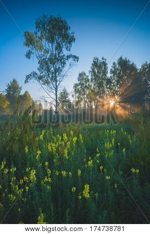 Majestic bright sunrise in a misty green valley with yellow flowers