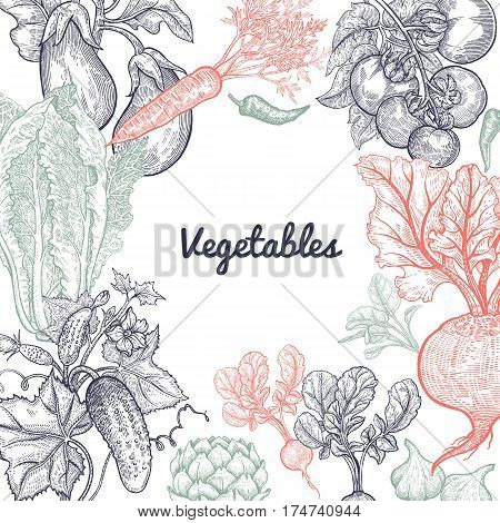 Frame of vegetables with space for text. Vector illustration art set. Beetroot carrots tomatoes cucumbers radishes lettuce garlic eggplant artichoke on white background. Vintage hand drawing