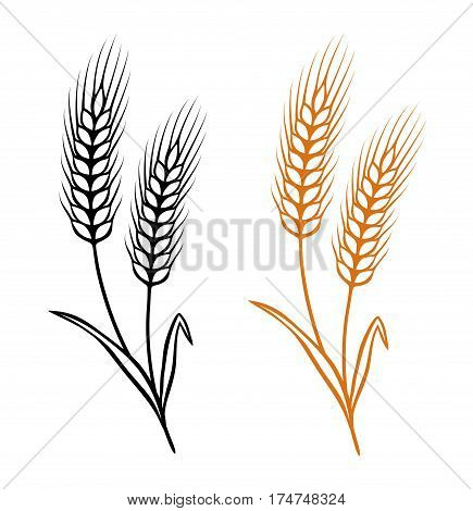 two isolated ears of wheat on white background