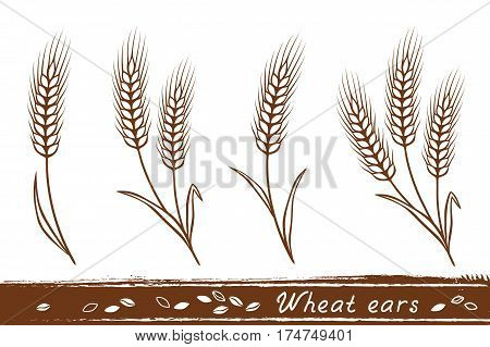 isolated wheat ears set with grain icons