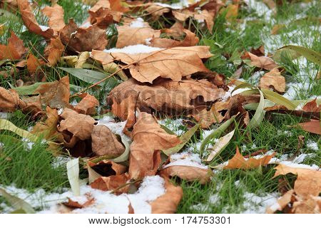 Dry autumn leaves on the snowbound green grass in park.
