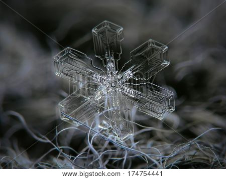 Macro photo of real snowflake: large snow crystal with broad, unusually thin and clean arms and small hexagonal center, glitters on dark gray woolen fabric in dim light of winter sky.