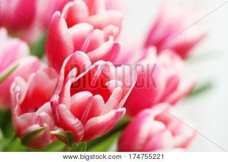 Beautiful bouquet pink tulip on dark background