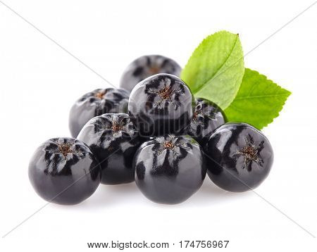 Chokeberry with leaf.Black ashberry.