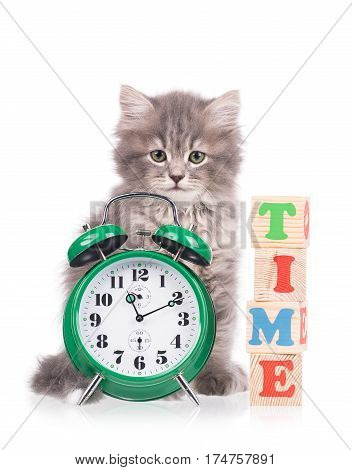 Cute fluffy kitten with alarm clock isolated over white background