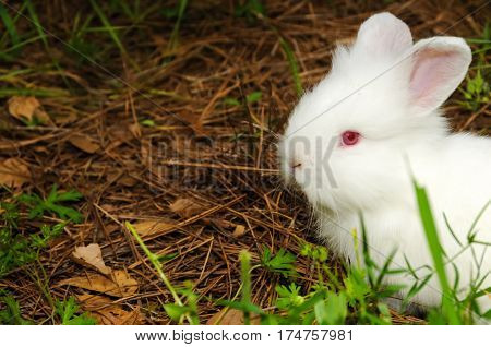 A white rabbit hiding in the grass