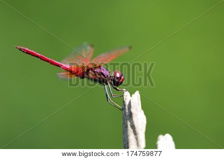 Image of dragonfly perched on a tree branch on nature background.