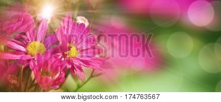 Background with colorful flowers and sunbeams in spring