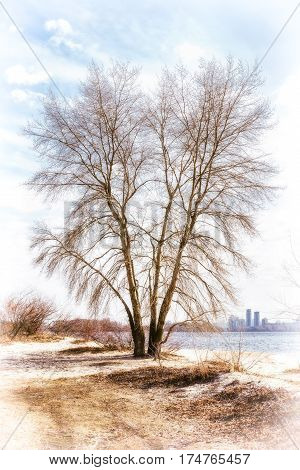 Tree Close To  The Dnieper River In Winter