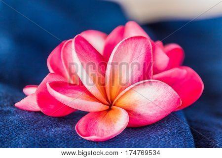 Pink frangipani flowers on Indigo dyed cloth