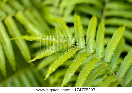 tree green leaf nature background and textrue