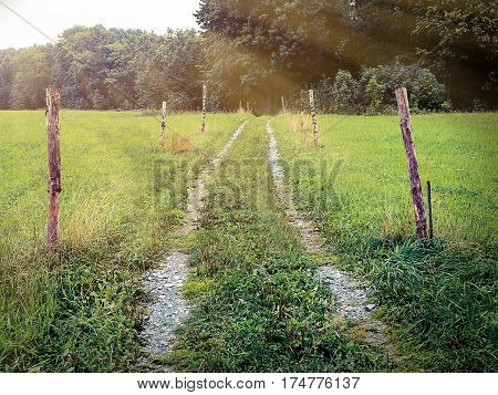 Beaten track or worn path through meadow toward foliage trees with poles around, center composition, moving towards objective, nostalgic vintage feeling, rays of light, natural landscape of central Europe
