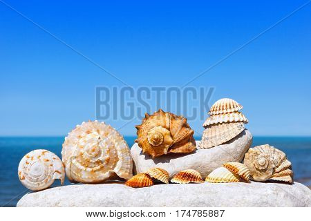 Shells and corals lying on the white stone on a background of blue sky and sea