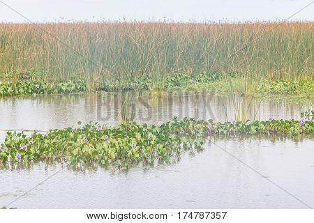 Lagoa Dos Patos Lake And Vegetation