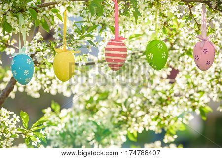 Several Easter colored eggs hanging on a tree branch color sunny spring day. Blooming flowers tree