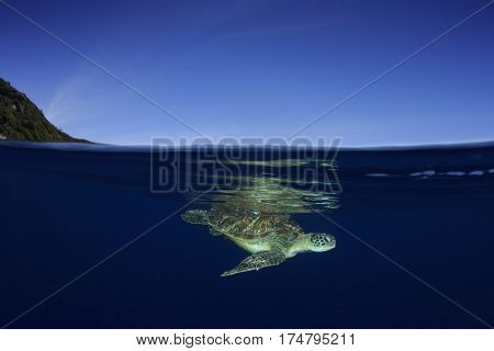 Sea Turtle underwater and ocean surface. Half and half, split image, over under