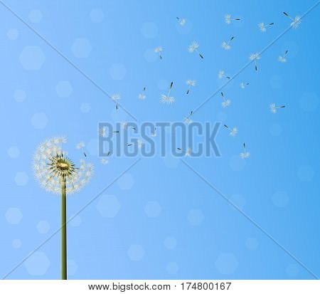 A lot of seeds escape from a dandelion flower on blue sky background. Vector illustration breaking free life journey concept .